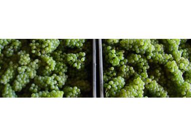 Vins pétillants biologiques